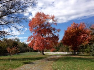 Fall Color at Three Graces Farm