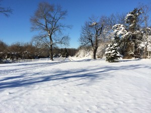 Winter at Three Graces Farm… and a little much needed serenity….