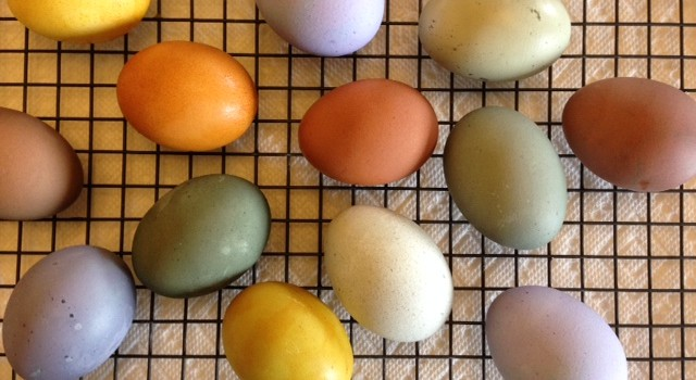 Easter Basket Bliss–Naturally Dyed Eggs, Sourdough Challah, Hot Cross Buns, and Blooms!