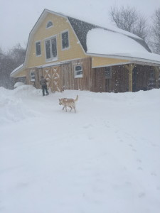 Man… Dog… Barn...Snow